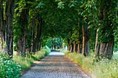Idyllic avenue, Lancken-Granitz, Ruegen, Mecklenburg-Western Pomerania, Germany, Europe