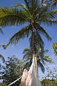 Feet of man relaxing in hammock at Xel Ha Water Park, near Tulum, Quintana Roo, Mexico