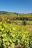 View over vineyards to Oberrotweil, Vogtsburg im Kaiserstuhl, Baden-Wurttemberg, Germany