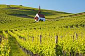 Vineyards with Eichertkapelle (chapel), Jechtingen, Sasbach am Kaiserstuhl, Baden-Wurttemberg, Germany