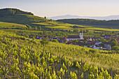 View over vineyards at Jechtingen, Sasbach am Kaiserstuhl, Baden-Württemberg, Germany, Europe