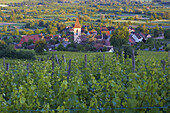 View over vineyards at Burkheim, Kaiserstuhl, Baden-Württemberg, Germany, Europe