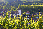 View over vineyards at Achkarren, Kaiserstuhl, Baden-Württemberg, Germany, Europe