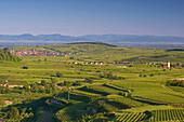 View over vineyards to Oberrotweil and Burkheim, Vosges Mountains in background, Vogtsburg im Kaiserstuhl, Baden-Württemberg, Germany