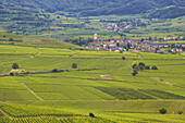 View over vineyards at Oberrotweil and Bickensohl, Kaiserstuhl, Baden-Württemberg, Germany, Europe