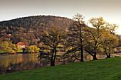 Alder and house at the riverside, near Freudenberg, Main river, Odenwald, Spessart, Franconia, Bavaria, Germany, Erlen