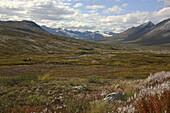 Moose, Kluane National Park and Reserve, Yukon Territory, Canada