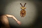 Arm, Arme, Ausgestopfte Tiere, Ein Tier, Eine Person, Eins, Erwachsene, Erwachsener, Farbe, Fremd, Horn, Hörner, Innen, Kopf, Köpfe, Mauer, Mauern, Mensch, Menschen, Nackt, Nacktheit, Offen, Offene Hand, Offene Hände, Rücken, Rückenansicht, Säugetier, Säu