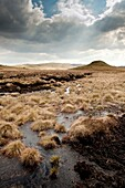 Raised peat bog, upland Ceredigion, rural west wales UK - the source of the River Teifi