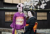 maiko and geisha in Gion district,Geisha dans le quartier de Gion à Kyoto, Japon