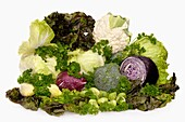 Food still life with all sorts of fresh juicy vegetables and greens Cauliflower, broccoli, green cabbage, red cabbage, head lettuce, red leaf lettuce, brussels sprouts, belgian endive, radicchio, nappa and curly parsley Isolated on white background