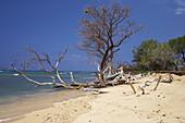 Driftwood at Ukumehame Beach, Maui, Hawaii, USA, America