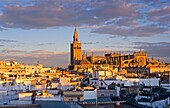 Cathedral and the roofs of the city  Seville, Andalusia, Spain