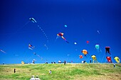 Giant kites above the hillside at the Berkeley kite festival