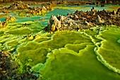 Alien landscape, Dallol´s hot springs create fantastic multicolored pools and patterns, Dallol Volcano, Ethiopia