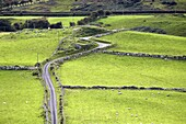 small tight winding windy country lane road leading through farmland down to torr head