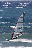 male windsurfer in wetsuit and helmet rides his board at speed in the sea off El Medano beach Tenerife Canary Islands Spain