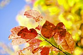 burst of fall color