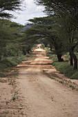 Sand track under acacia trees, Kenia, Afrika