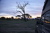 Toyota Landcruiser in in the steppe at sunset, Serengeti, Tanzania, Africa