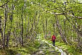 Wanderer auf dem Kungsleden, Abisko Nationalpark, Lappland, Nordschweden, Schweden