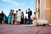 A dog and a wedding party near the San Vincenzo Church, Stromboli volcanic Island, Aeolian islands, Sicily, Italy