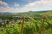 View along vineyard to Ahrweiler, Bad Neuenahr-Ahrweiler, Rhineland-Palatinate, Germany