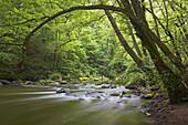 Rapids of the river Prüm near Irrel, Eifel, Rhineland-Palatinate, Germany, Europe