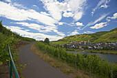 Reill an der Mosel, Weinanbau, Rheinland-Pfalz, Deutschland, Europa