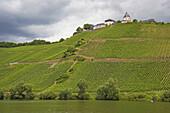 Blick von Pünderich auf die Marienburg, Mosel, Weinanbaugebiet, Rheinland-Pfalz, Deutschland, Europa