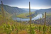 Moselschleife bei Bremm, Weinanbaugebiet, Rheinland-Pfalz, Deutschland, Europa