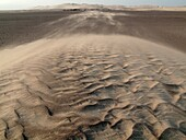 Namibia - The strong wind blows the sand from tiny sand dunes which form around the scanty vegetation towards the belt of large dunes In the northern Namib Desert Skeleton Coast Park, Namibia