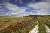 Landscape near Castrojeriz, Camino Frances, Way of St. James, Camino de Santiago, pilgrims way, UNESCO World Heritage, European Cultural Route, province of Burgos, Old Castile, Castile-Leon, Castilla y Leon, Northern Spain, Spain, Europe