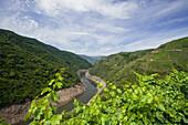 Canyon, Gargantas del Sil and Rio Sil river, near Castro Caldelas, Way of St. James, Camino de Santiago, pilgrims way, province of Lugo, Galicia, Northern Spain, Spain, Europe