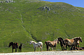 Savaged horses grazing in the mountains, Campo Imperatore, Gran Sasso National Park, Abruzzi, Italy, Europe