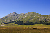 Horse herd on a meadow in the mountains, Campo Imperatore, Gran Sasso National Park, Abruzzi, Italy, Europe