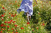 Caucasian ethnicity, child, childhood, Female, field, flower, girl, kid, spring, young, youth, F57-1149192, AGEFOTOSTOCK