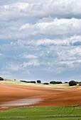 Agriculture, Clouds, Color, Cuenca, Forest, Grassland, Green, Horizontal, La mancha province, Landscape, Orange, Paisaje, Pasture, Sky, Spain, Vegetal, Vertical, K08-1031980, agefotostock