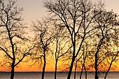Tree silhouettes along shore of Lake Winnipeg at dawn