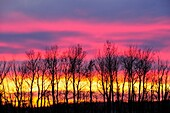 Sunset skies and tree silhouettes