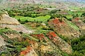 Heavily eroded Bentonite hills with scoria or porcelanite