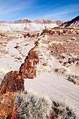 Arid, Arizona, Badlands, Desert, Dry, Petrified forest national park, Rock, Southwest, United states of america, Weather, Winter, Wood, S19-1107245, agefotostock