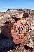 Arid, Arizona, Badlands, Desert, Dry, Petrified forest national park, Rock, Southwest, United states of america, Weather, Winter, Wood, S19-1107247, agefotostock