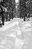 California, Landscape, Nature, Scenic, Sierra mountains, Ski, Snow, Sports, Trees, United states of america, Weather, Winter, S19-1107263, agefotostock