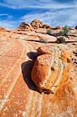 Arizona, Cottonwood cove, Delicate, Desert, Fin, Landscape, Nature, Page, Rock, Sandstone, Scenic, South coyote buttes, Southwest, United states of america, S19-1107400, agefotostock