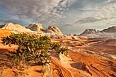 Arizona, Delicate, Desert, Landscape, Nature, Page, Rock, Sandstone, Scenic, Southwest, Swirls, United states of america, White pockets, S19-1107407, agefotostock
