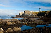 beacon, coast, Landscape, lighthouse, Low tide, ocean, Oregon, point, scenic, Starfish, Starfishes, tidepool, USA, Yaquina, S19-1190534, AGEFOTOSTOCK