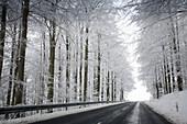 country road to Wasserkuppe, highway, beech tree, European beech, beech grove, snow, tree, winter, near Gersfeld, low mountain range, Rhoen, Hesse, Germany