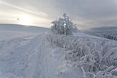 to leave one's mark in the snow, landscape, scenery, snow, snowy, snow-covered, snow, winter, near Gersfeld, Wasserkuppe, low mountain range, Rhoen, Hesse, Germany