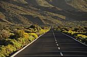 Road in the Canadas de Teide, green bushes and lava field, Teide Nationalpark, Tenerife, Spain